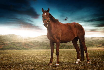 Sie lieben Pferde? Dann lernen Sie doch Reiten, egal wie alt Sie sind!