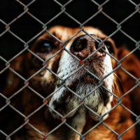 Tiere als Erben – Vererben an den Tierschutz