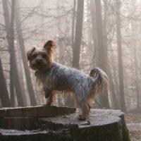Welche Hunderassen eignen sich für Senioren und Rentner?